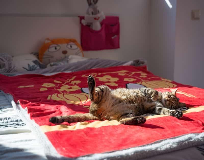 Guest bedroom pet-friendly